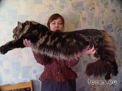 сайт знакомств в кошках
