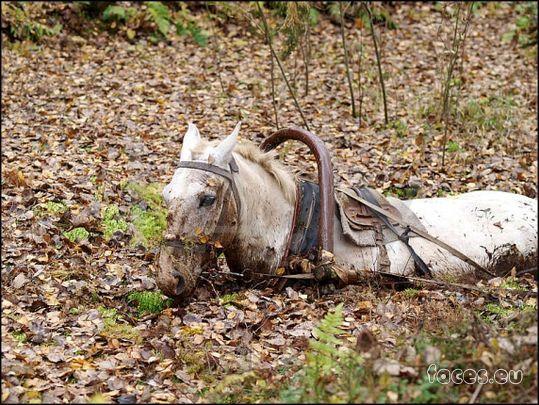 Стих про тонущих лошадей