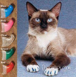 Примочки для котов